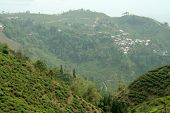 picture of darjeeling  - Tea Garden in the vicinity of Darjeeling West Bengal India Asia - JPG