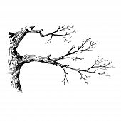 Tree Branch. Hand Drawn Sketch Style Vector Illustration Of Tree Branch Without Leaves. Isolated On  poster