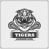 Tigerr6.eps poster