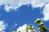 Yellow Flowers On A Branch Against The Blue Sky For Cards poster