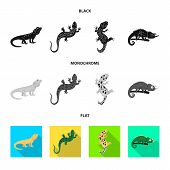 Isolated Object Of Tail And Fauna Logo. Collection Of Tail And Environment Stock Vector Illustration poster