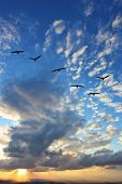 Flying Triangle flock of migratory birds. The magnificent sunset over the Adriatic Sea.