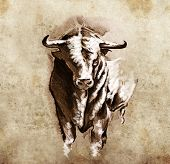 Sketch of tattoo art, spanish bull, dangerous bull with beaked horns