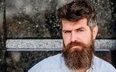 Confident Posture Of Handsome Man. Guy Masculine Appearance With Long Beard. Barber Concept. Beard G poster