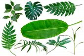 Collection Green Tropical Leaves, Palm Tree Branches, Banana Leaf And Exotic Rainforest Leaves. Bota poster