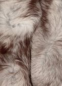 picture of arctic fox  - Background of fur texture Arctic fox - JPG