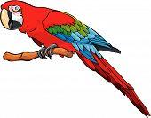 Постер, плакат: Яркие цветные попугай