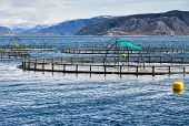image of fjord  - Norwegian fish farm for salmon growing in fjord - JPG
