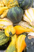 Squashes In Yellow And Green