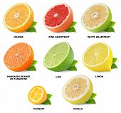 picture of tangelo  - Collection of citrus fruits isolated on white - JPG