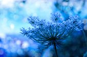 stock photo of mood  - Wildflower background in beautiful blue tones with bokeh lights - JPG