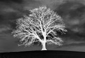 picture of inverted  - inverted photo of tree on a hill - JPG