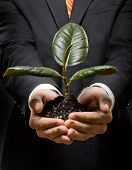 foto of soliciting  - human hands close with scion rubber plant business concept - JPG