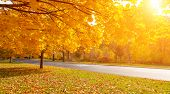 image of fall day  - Autumn tree with yellow fall leaves in scenic park - JPG