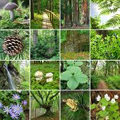 stock photo of redwood forest  - collage  - JPG