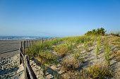 stock photo of fragile  - Fragile sand dunes along the New Jersey shoreline in late summer - JPG