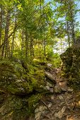 image of acadian  - Laverty Falls Trail Path  - JPG