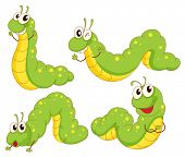 image of green caterpillar  - Illustration of the four green caterpillars on a white background - JPG