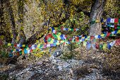 stock photo of mustang  - Autumn colors and prayer flags in Muktinath village Mustang Nepal.