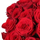 pic of bunch roses  - Giving a bunch of red roses on birthday Valentine - JPG