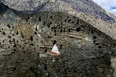 picture of mustang  - Painted holy cave - JPG