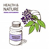 pic of elderberry  - Health and Nature Supplements Collection - JPG