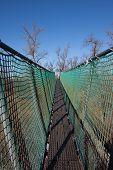 picture of tibetan  - Tibetan bridge in the wildlife park of Ticino Lombardy - JPG