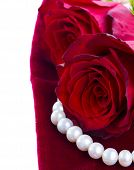 picture of rose close up  - fresh red roses close on velvet close up  border isolated on white  background - JPG