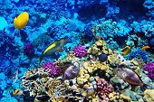 image of butterfly fish  - Coral and fish in the Red Sea - JPG