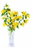 stock photo of cruciferous  - Marsh Marigold Yellow wildflowers in vase on white background - JPG