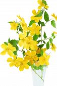 picture of cruciferous  - Bouquet Marsh Marigold Yellow wildflowers in vase isolated on white background  - JPG