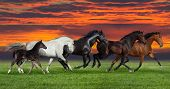 foto of beautiful horses  - Group of five horses run gallop on gree grass against beautiful - JPG