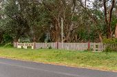 pic of neglect  - Old wooden fence and gate showing signs of neglect - JPG