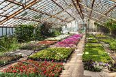 picture of greenhouse  - Flowers and grass in greenhouse in spring - JPG