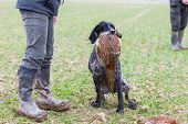 foto of hunters  - hunter with a dog at hunt - JPG