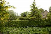 image of english cottage garden  - a very green garden in the Peak District - JPG