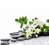 picture of stone-therapy  - Still life with three white gardenia with therapy stones  - JPG