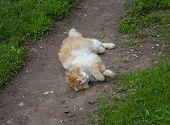 stock photo of homeless  - Homeless red cat lying in the dust - JPG