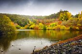 foto of duck pond  - Vibrant colors of autumn in the park with pond and ducks - JPG
