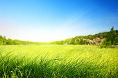 foto of murmansk  - field of grass in north mountain  - JPG