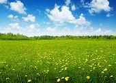 Постер, плакат: поле из весенних цветов и Солнечный день