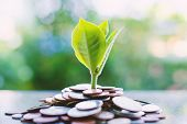 Plant Growing From Piles Of Money On Blurred Green Natural Background For Business And Financial Gro poster
