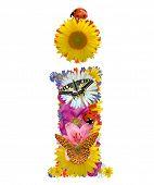 foto of alphabet letters  - alphabet of flowers - JPG