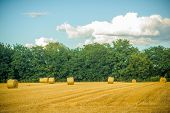 Haylages Rolled On Cut Grass, Fodder. Hay Bales Dry On Field, Agriculture. Fodder, Forage, Haymaking poster
