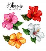 Hibiscus Flower Set. Red White Pink Yellow Blooming Blossom With Green Leaves. Realistic Detailed Ha poster