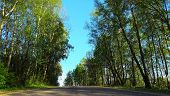 Asphalt Country Road Through Beautiful Wild Forest. Wild Forest And Country Road. poster