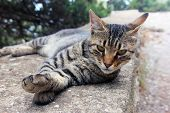 Beautiful Crimean Non-pedigree Tabby Eared Cat Lying On Stone Parapet And Pricked His Ears Closeup poster