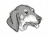 Retro Cartoon Style Drawing Of Head Of A Black And Tan Coonhound  , A Domestic Dog Or Canine Breed O poster