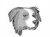 Retro Cartoon Style Drawing Of Head Of A Border Collie , A Domestic Dog Or Canine Breed On Isolated  poster