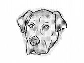 Retro Cartoon Style Drawing Of Head Of A Catahoula Bulldog Also Known As American Mastahoulas, A Dom poster